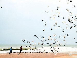 Hàng ngàn con bồ câu tại công viên Biển Đông