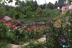 Thiên nhiên, cây cỏ tại suối Hoa