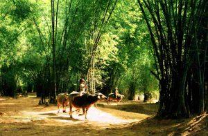 Vẻ bình dị, mộc mạc của làng quê Việt Nam tại Làng cổ Phong Nam