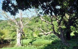 Trải nghiệm trèo cây ngắm phong cảnh thiên nhiên nuối Nai