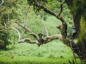 Cây đa ngàn năm được nhiều bạn trẻ săn lùng