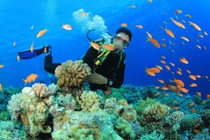 Ngắm san hô dưới biển Sơn Trà