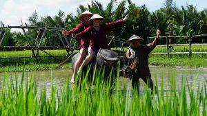 Trải nghiệm làm nông dân thực thụ khi du lịch Rừng dừa 7 mẫu Hội An