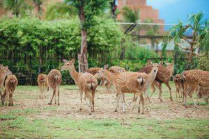 Các loài động vật hoang dã sống hòa thuận vui vẻ