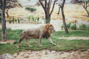 Những con thú săn mồi huyền thoại