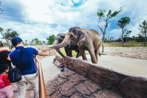Những chú voi vô cùng thân thiện