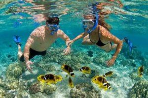 Trải nghiệm lặn ngắm san hô cực kì thú vị tại Cù Lao Chàm