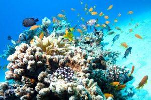 Lặn ngắm san hô và cá biển nhiều màu sắc tại Ghềnh Bàng Đà Nẵng