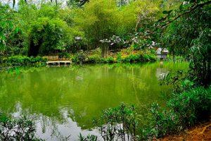 Vẻ đẹp yên bình và êm đềm của Sơn Trà Tịnh Viên